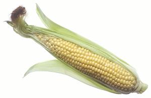 http://free-extras.com/images/corn-5599.htm